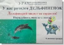 Дельфинарий Геленджика, родился дельфиненок
